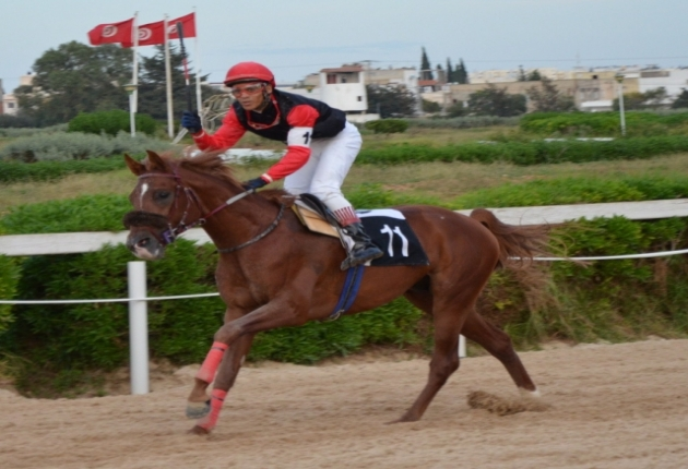 cheval arabe tunisien
